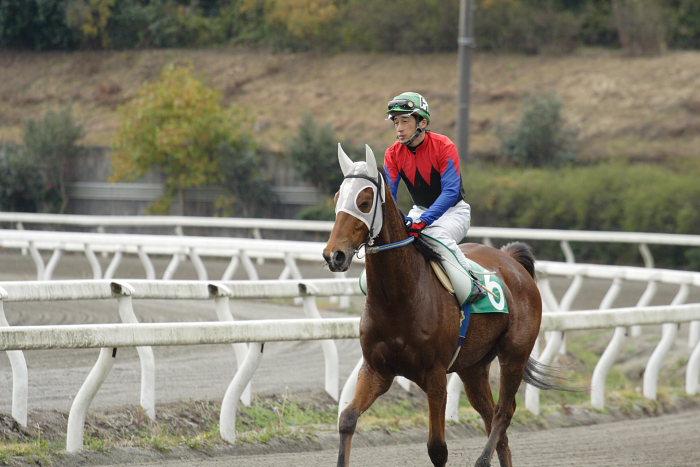 2006年11月25日(土) 高知競馬 まだまだ元気なオースミレパード_a0077663_4355783.jpg