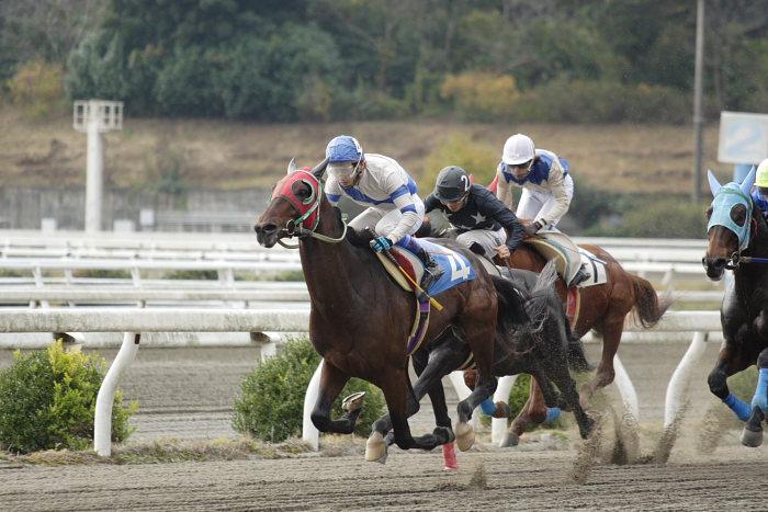 2006年11月25日(土) 高知競馬 まだまだ元気なオースミレパード_a0077663_4365594.jpg