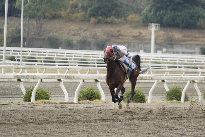 2006年11月25日(土) 高知競馬 まだまだ元気なオースミレパード_a0077663_4371181.jpg