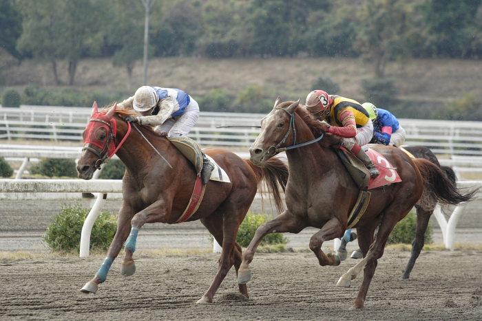 2006年11月25日(土) 高知競馬 まだまだ元気なオースミレパード_a0077663_4372474.jpg