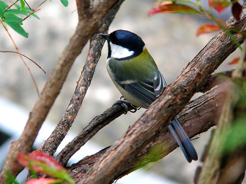 庭に来る野鳥_e0016894_0241796.jpg