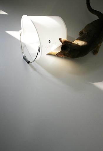 [猫的]誰だこんな所にバケツを置いたのは!_e0090124_8423827.jpg