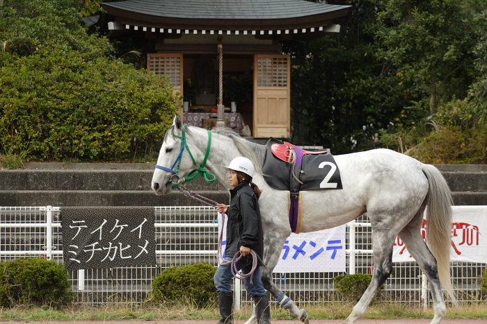 2006年11月25日(土) 高知競馬 6R_a0077663_3431539.jpg