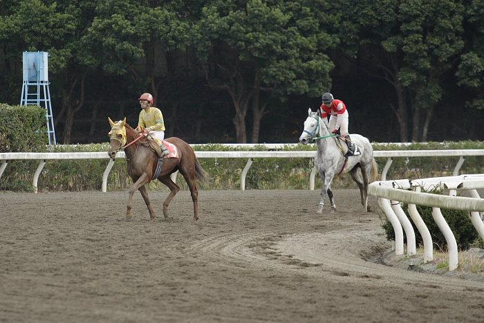 2006年11月25日(土) 高知競馬 6R_a0077663_3523853.jpg