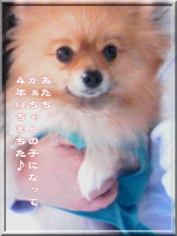 b0078073_18462095.jpg