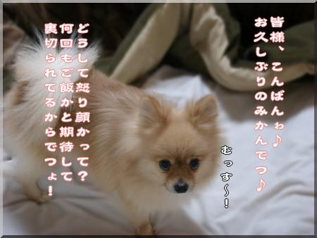 b0078073_18513636.jpg