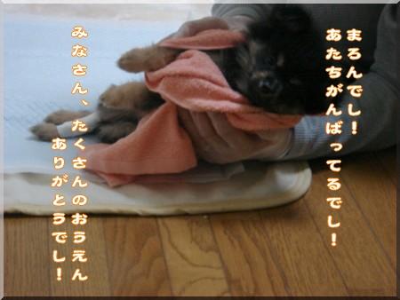 b0078073_1857446.jpg