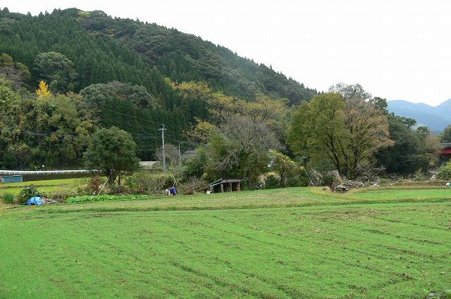 秋深まる 日南市酒谷近辺_a0043276_42554100.jpg