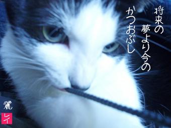 d0071596_22421048.jpg