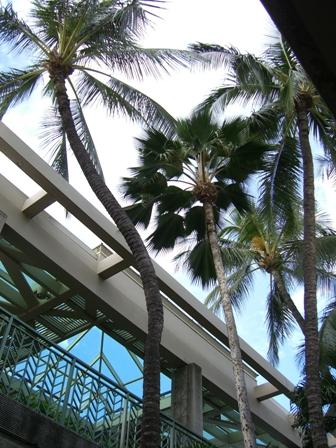 hawaii 旅日記1(出発)_f0059796_2035852.jpg