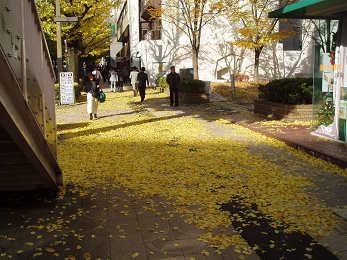 黄色いジュウタン_b0074601_22223026.jpg