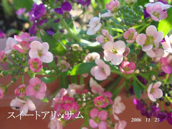 f0057006_16354264.jpg