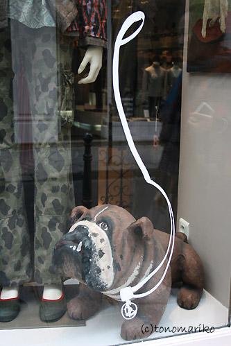ウィンドーの犬たち_c0024345_104672.jpg