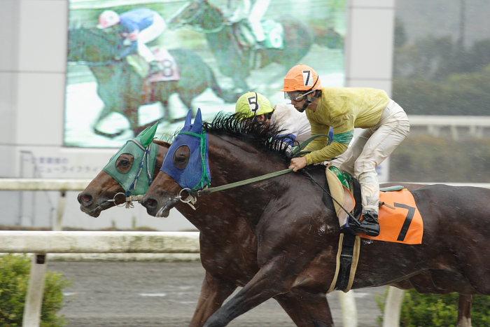 2006年11月26日(日) 高知競馬 3R_a0077663_1816928.jpg
