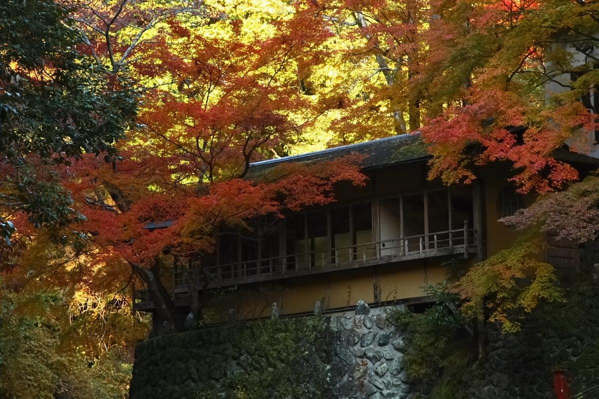 京都 高尾 <西明寺> 紅葉 3_f0021869_20404679.jpg