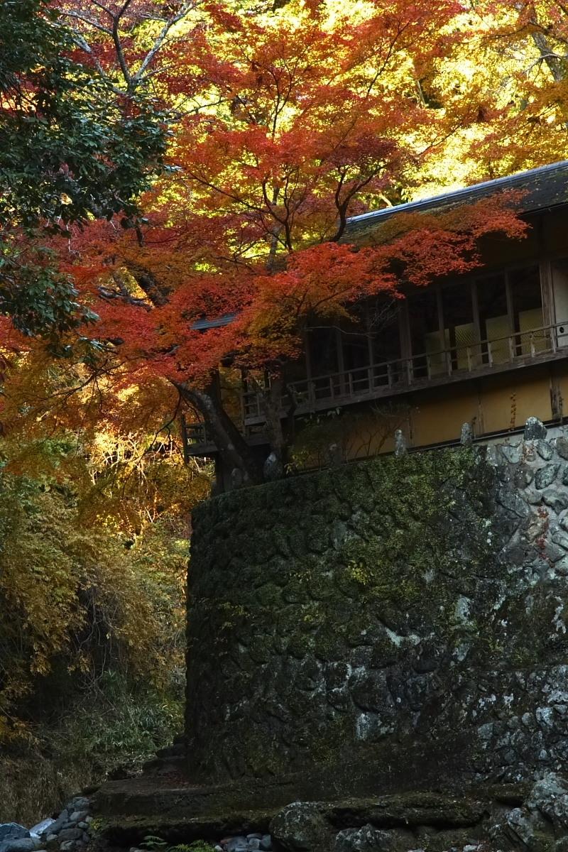 京都 高尾 <西明寺> 紅葉 3_f0021869_20511174.jpg