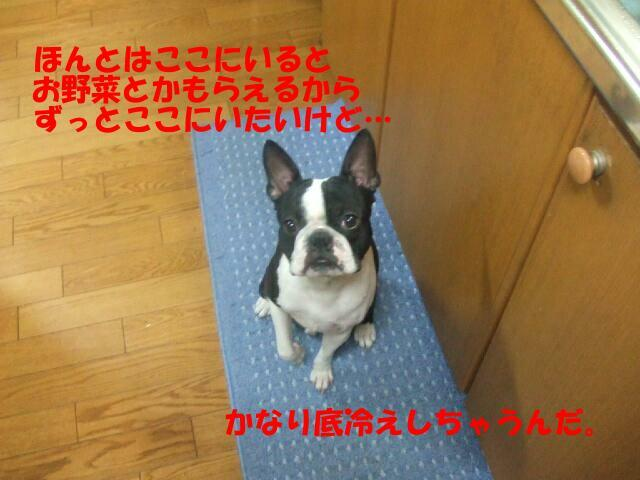 f0059334_9193961.jpg