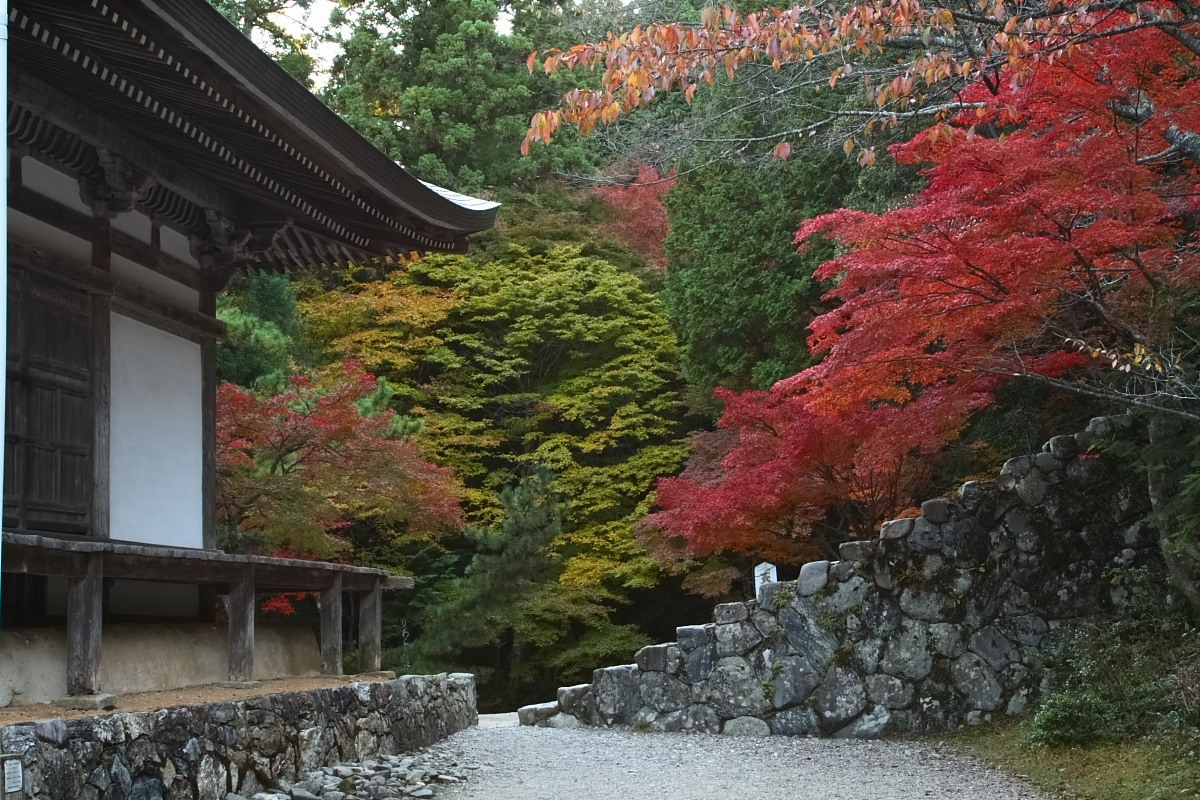 京都 高尾 <神護寺> 紅葉 _f0021869_21342976.jpg