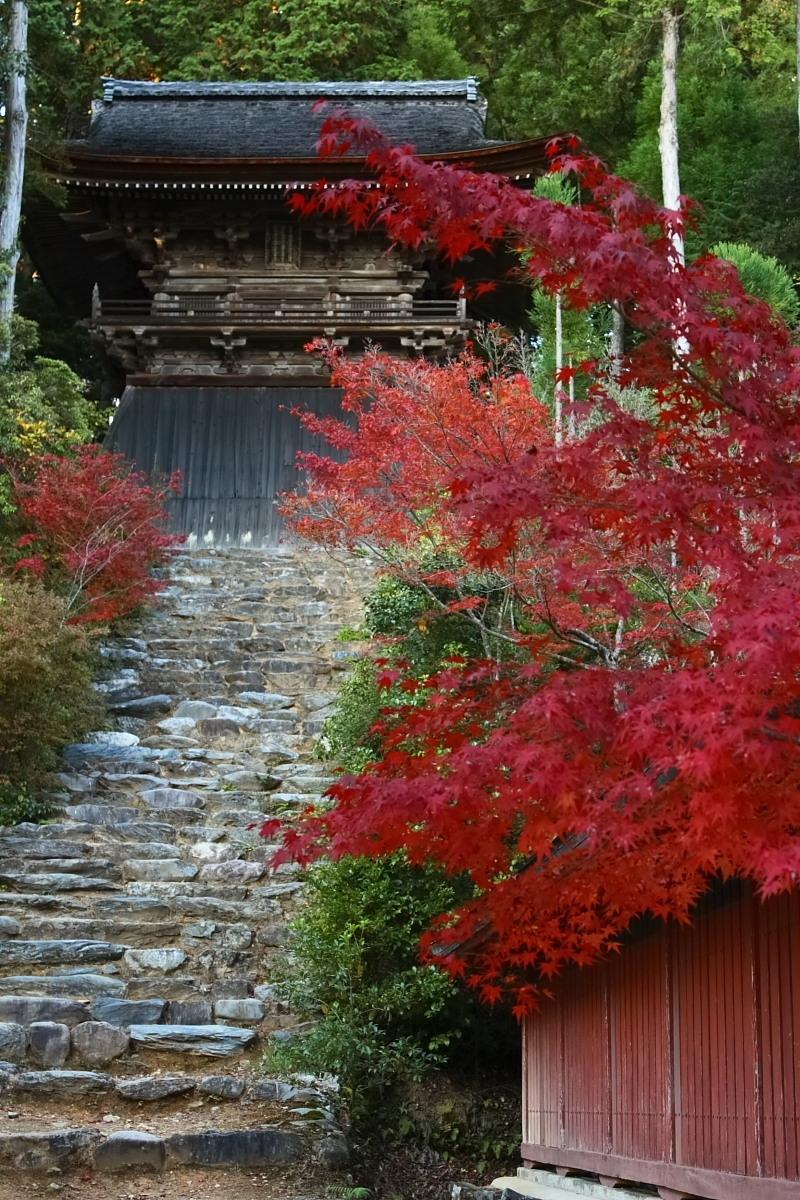 京都 高尾 <神護寺> 紅葉 _f0021869_21384425.jpg