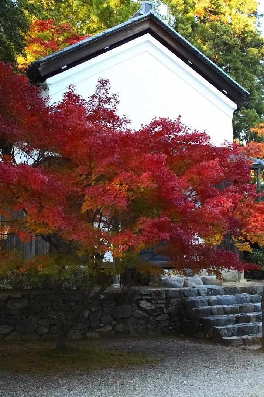 京都 高尾 <神護寺> 紅葉 _f0021869_2138586.jpg