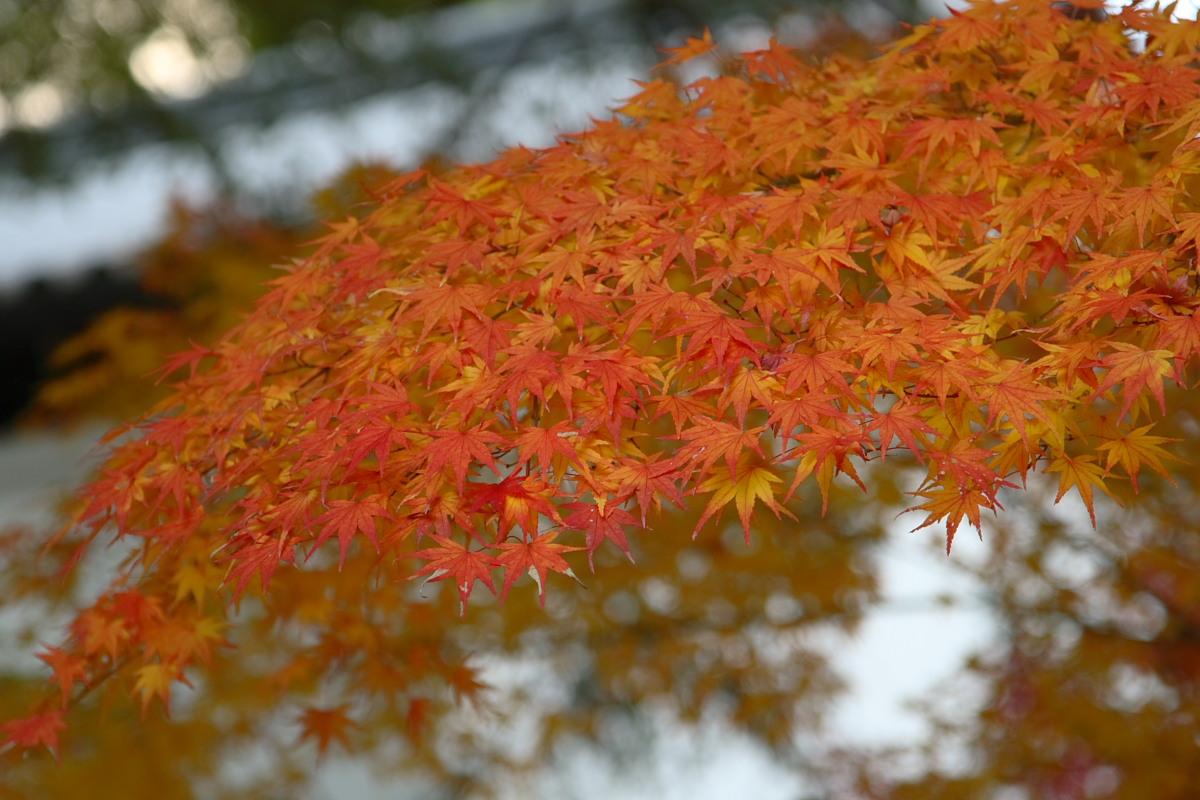 京都 高尾 <神護寺> 紅葉 _f0021869_2140138.jpg