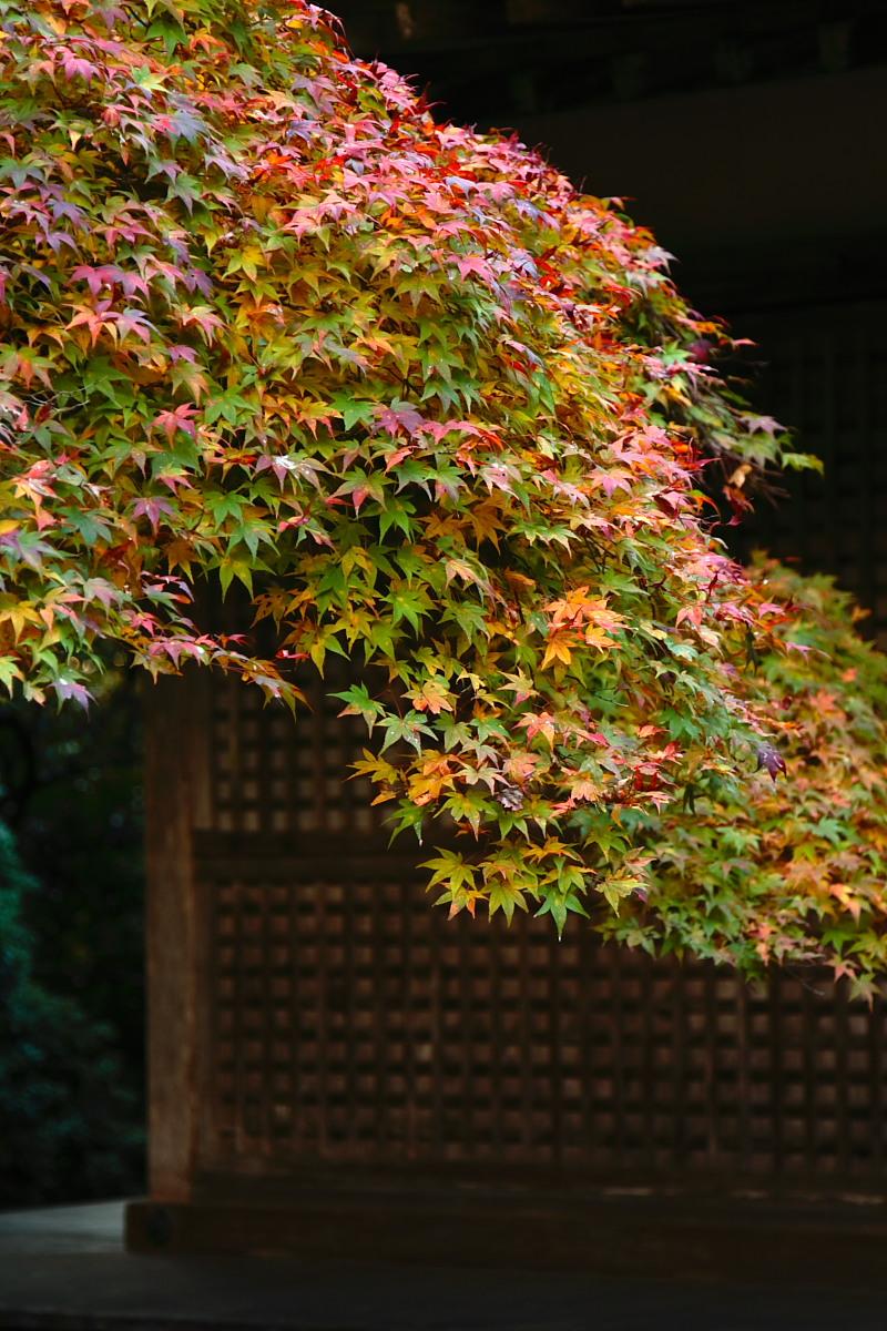京都 高尾 <神護寺> 紅葉 _f0021869_21412155.jpg