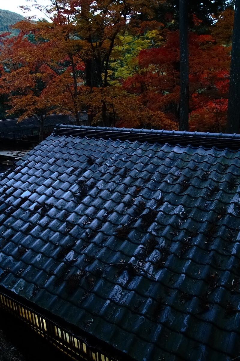京都 高尾 <神護寺> 紅葉 _f0021869_2157737.jpg