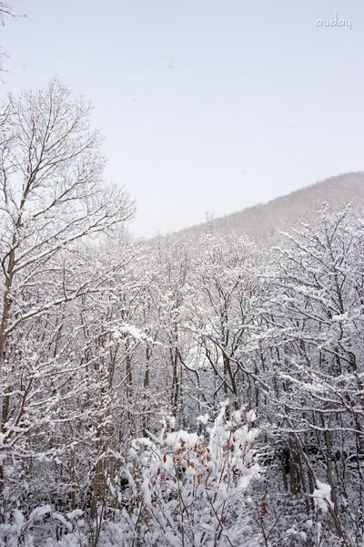 雪、いよいよ_c0048494_15215953.jpg