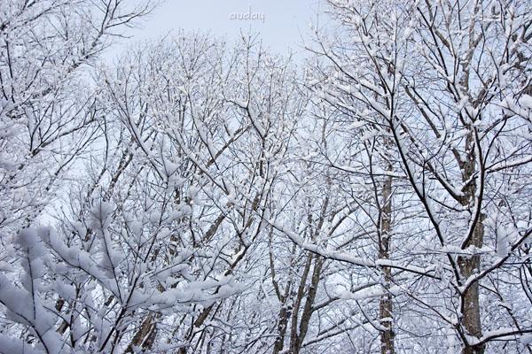 雪、いよいよ_c0048494_15222028.jpg
