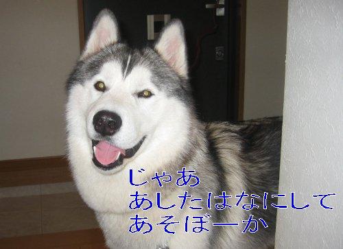 f0112407_0203851.jpg