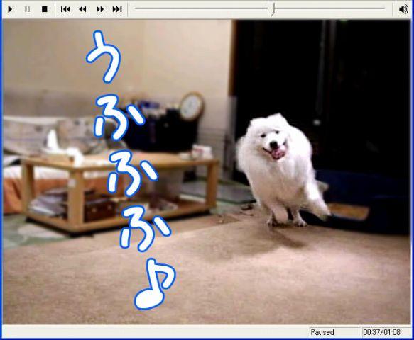 c0062832_2047527.jpg