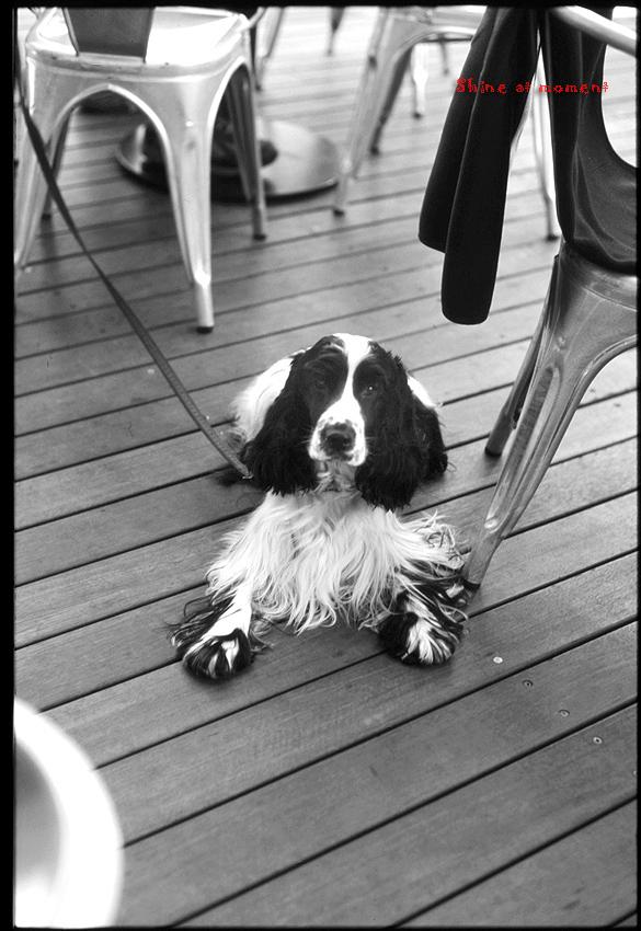 Dog_a0049142_011367.jpg