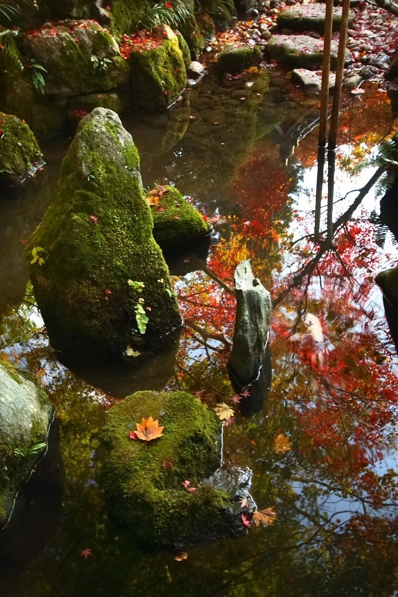 京都 大原 <宝泉院> 紅葉 _f0021869_10382932.jpg