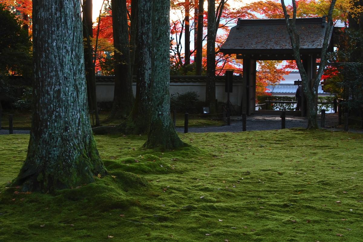 京都 大原 <三千院> 紅葉 2_f0021869_12415419.jpg