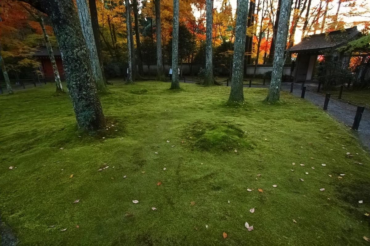京都 大原 <三千院> 紅葉 2_f0021869_12422776.jpg