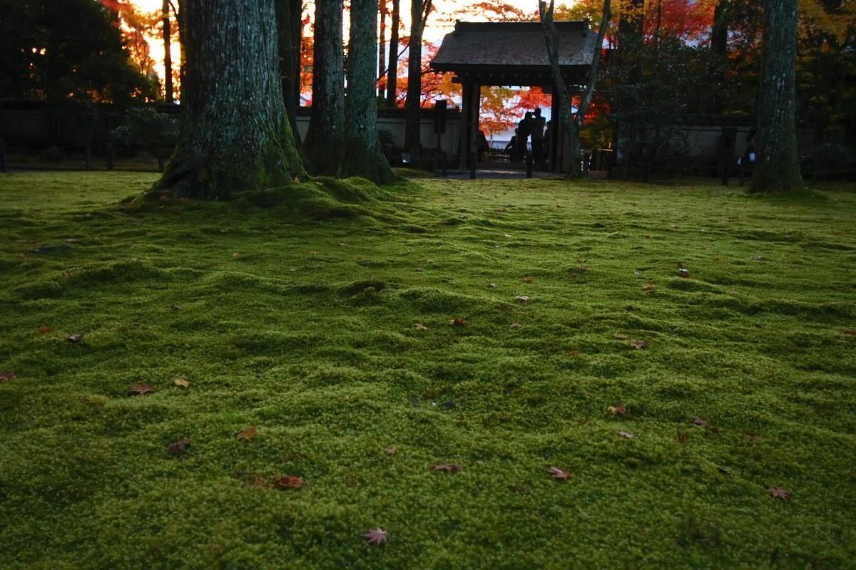 京都 大原 <三千院> 紅葉 2_f0021869_1243223.jpg