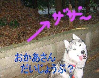 f0112407_0115781.jpg