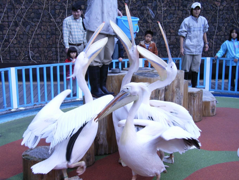 サンシャイン水族館_d0091021_22562234.jpg