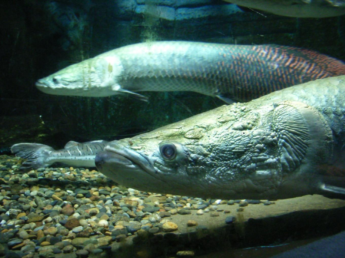 サンシャイン水族館_d0091021_2313590.jpg