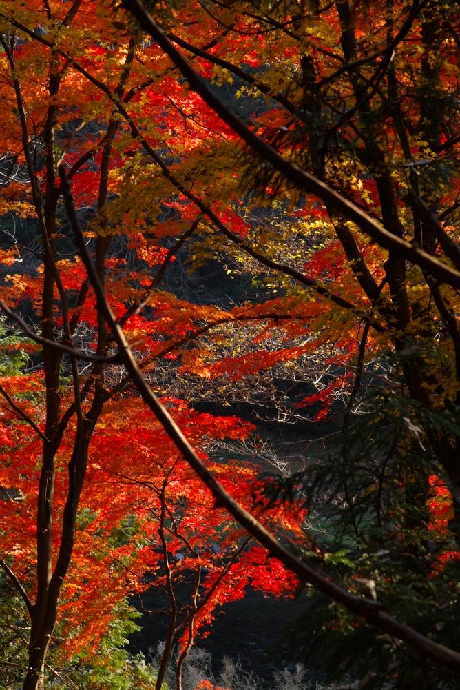 12/2 晴れ 嵐山渓谷の紅葉_a0060230_19124940.jpg