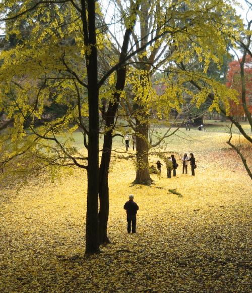 黄色の絨毯が光の具合で濃淡に、それが幻想的な風景を醸し出しています。この色合いに見惚れておる人たちが一緒に写真に納まっています。