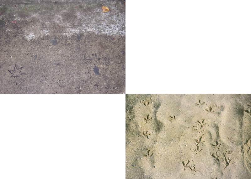 紅葉坂のコンクリートの「濡れ落ち葉」、そしてトリと人の歩いた跡_f0045090_1149364.jpg