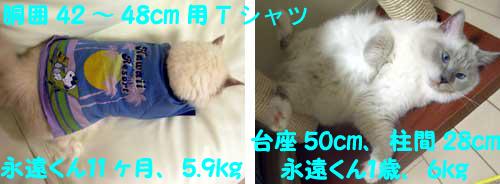 f0014893_2010298.jpg