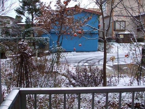 雪で真っ白_f0019498_21532586.jpg