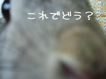 b0081503_14322658.jpg
