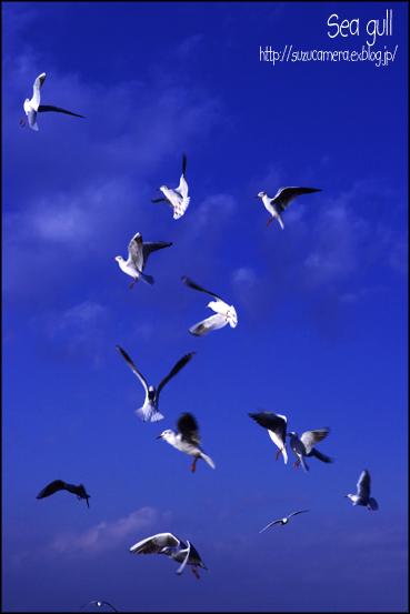 空中散歩_f0100215_2342513.jpg
