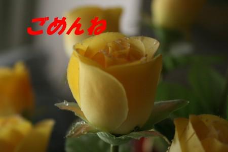 f0090116_22435130.jpg