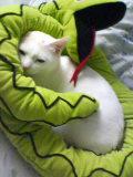 d0098762_18245132.jpg
