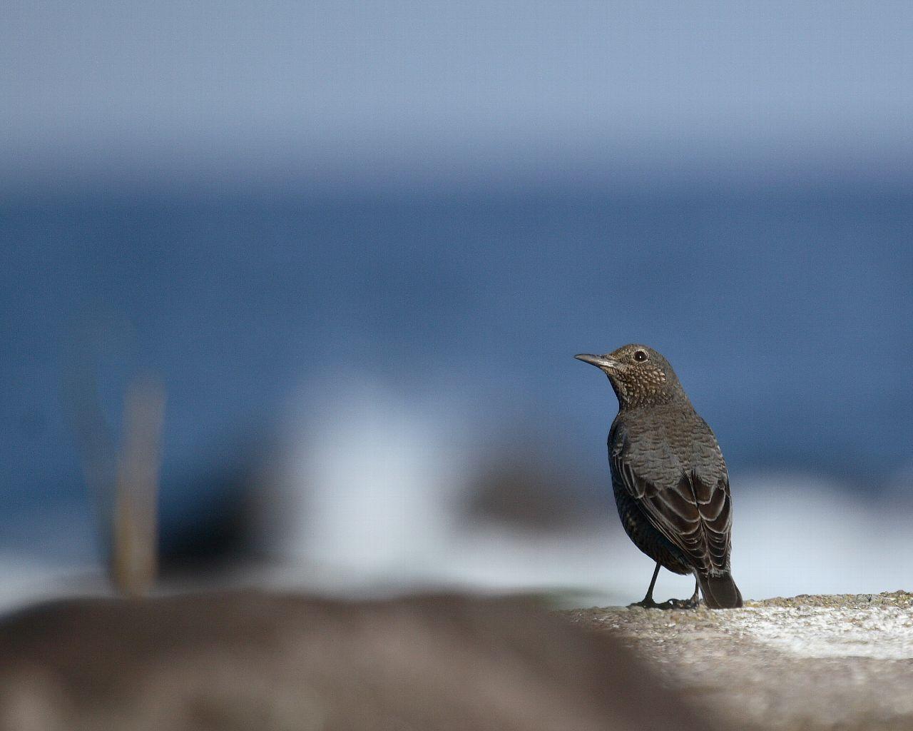磯の鳥らしい写真が撮れました。_f0105570_21333962.jpg