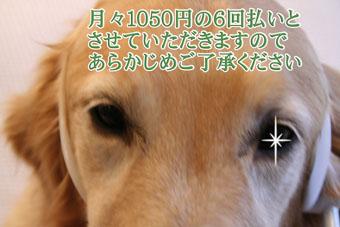 e0072606_1640279.jpg